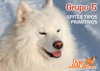 Spitz E Cães Do Tipo Primitivo Grupo 5 Guia De Raças
